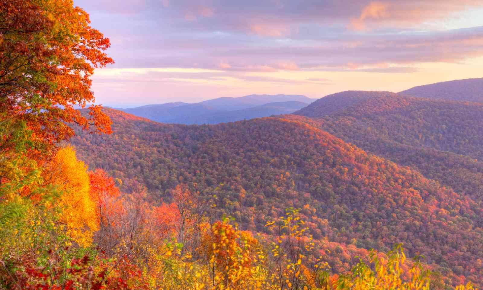 Shenandoah National Park (Shutterstock)