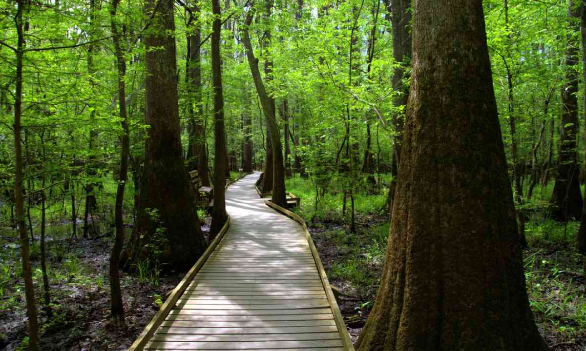 Congaree National Forest (Shutterstock)