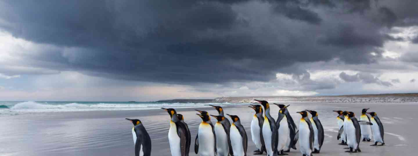 King Penguins (Shutterstock: see credit below)