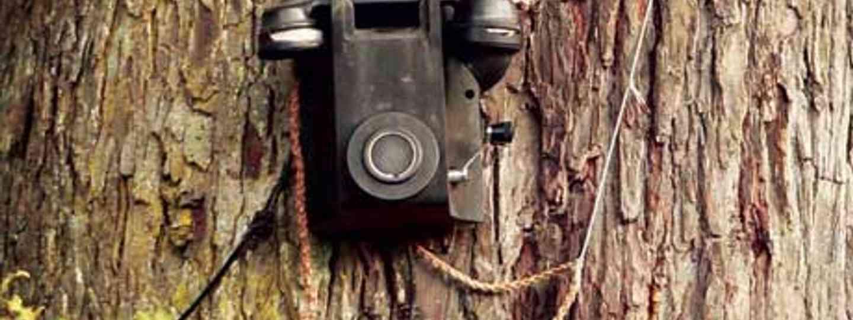 Phone tree, New Zealand (Ann Tubb)