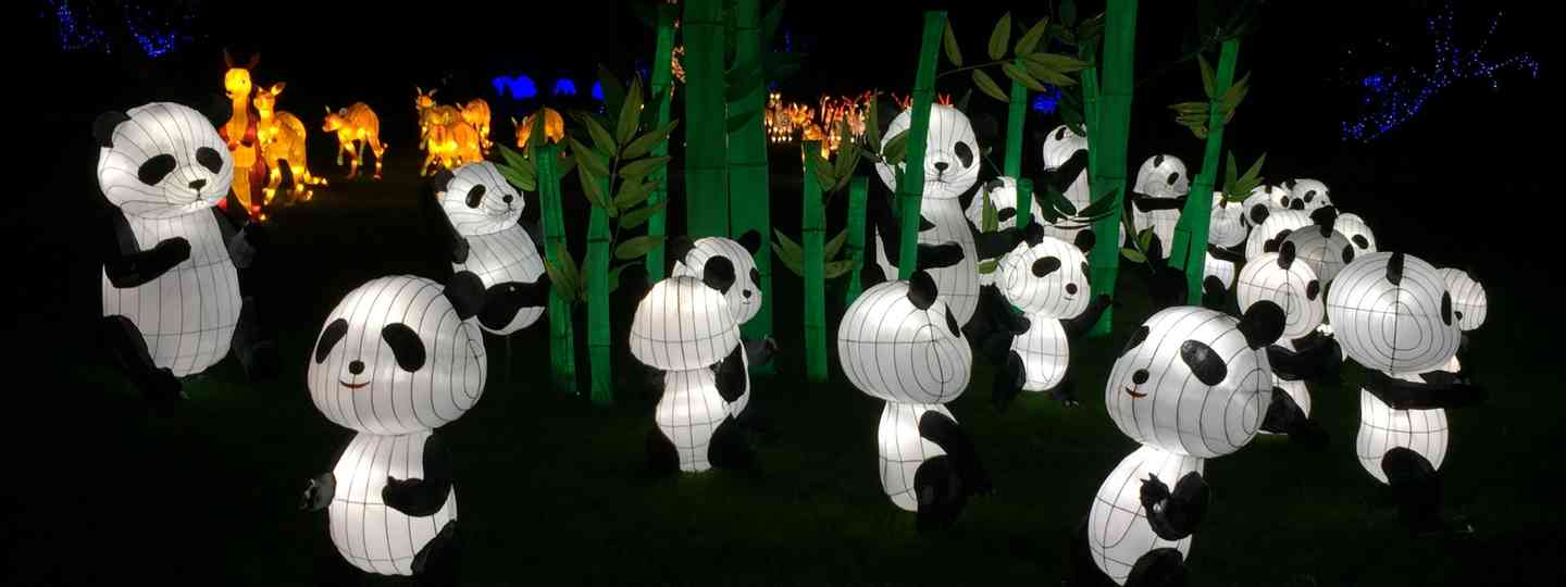 An embarrassment of pandas (Peter Moore)