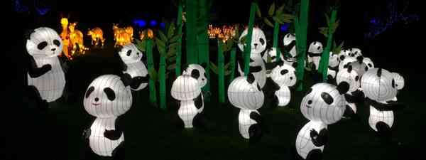 An embarrassment of pandas (Peter Moore)