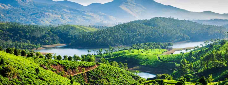 Tea plantations & Muthirappuzhayar River near Munnar, Kerala (Shutterstock)