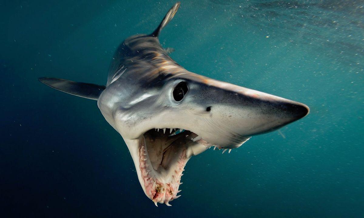 photo gallery 16 sensational shark photos by nat geo s brian skerry