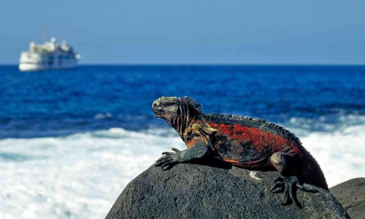 Marine iguana (Shutterstock)
