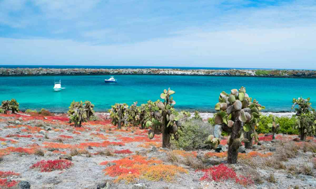 Galapagos South Plaza island (Shutterstock)