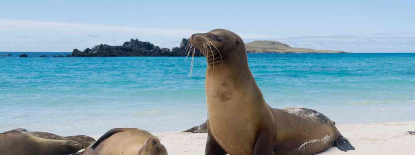 How to plan a trip to the Galapagos Islands (Shutterstock: see credit below)
