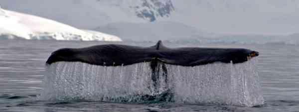 Whale-watching tales (Supplied: Jackie Freshfield)