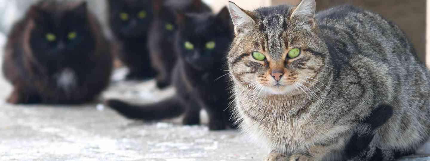 A group of cats, possibly in Romania (Shutterstock.com. See main credit below)