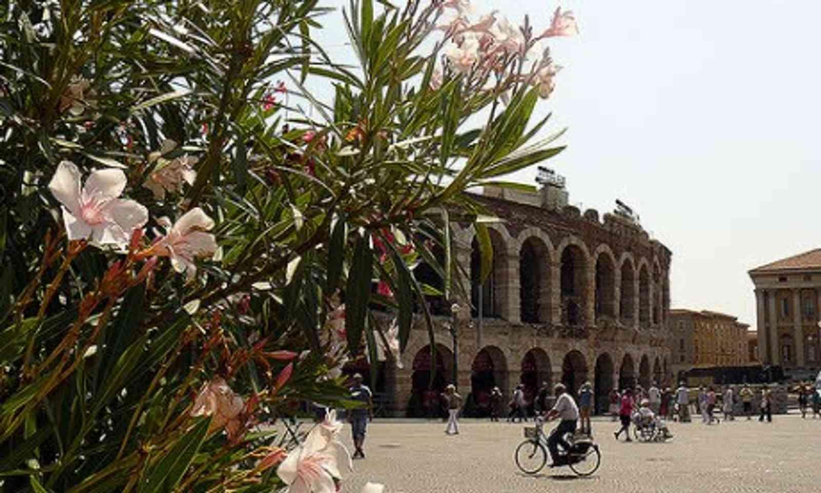 Lucca (Wanderlust)