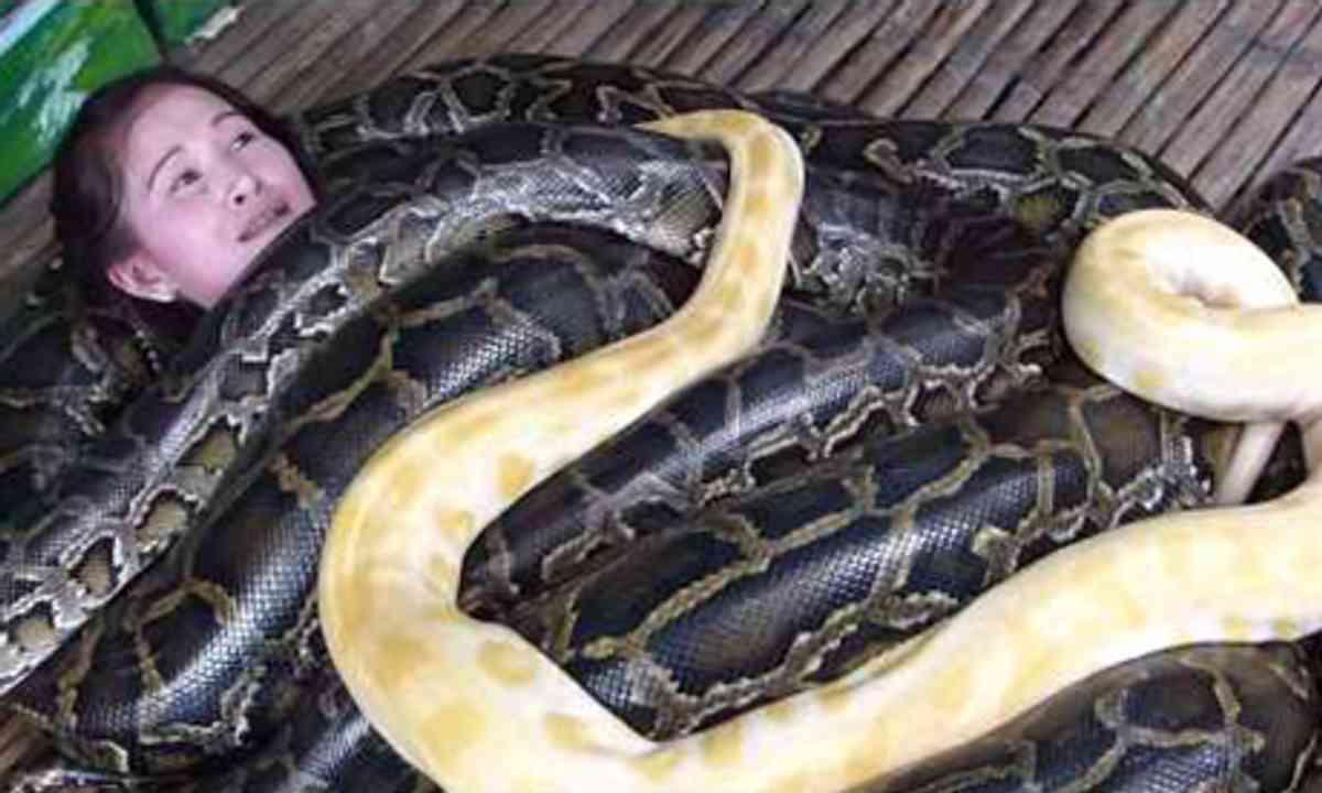 Python massage (Cebu Zoo)