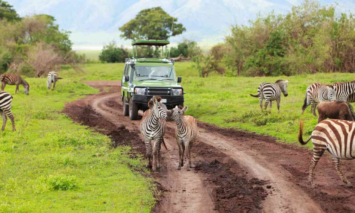 Safari in Ngorongoro Crater (Shutterstock)