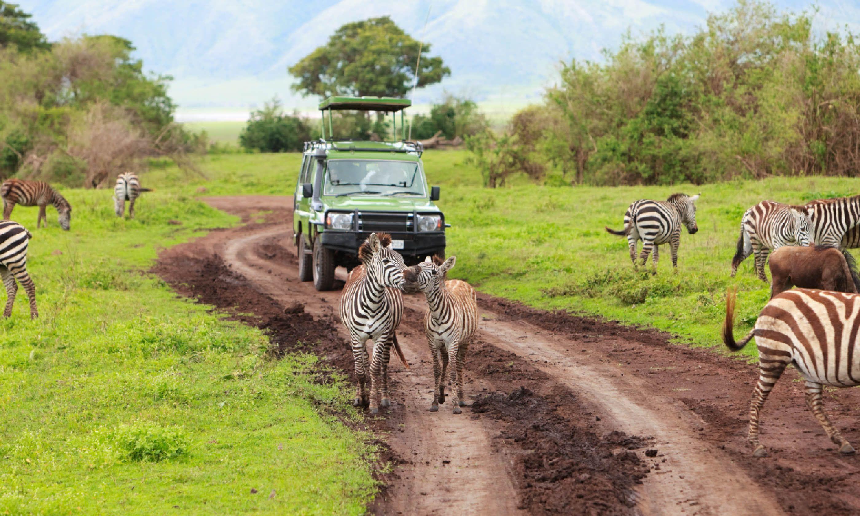 Safari in Ngorongoro Crater (Shutterstock)
