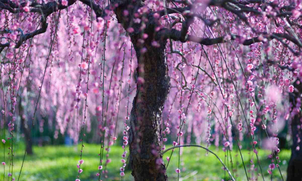 Nagoya Agriulture Center (Shutterstock)