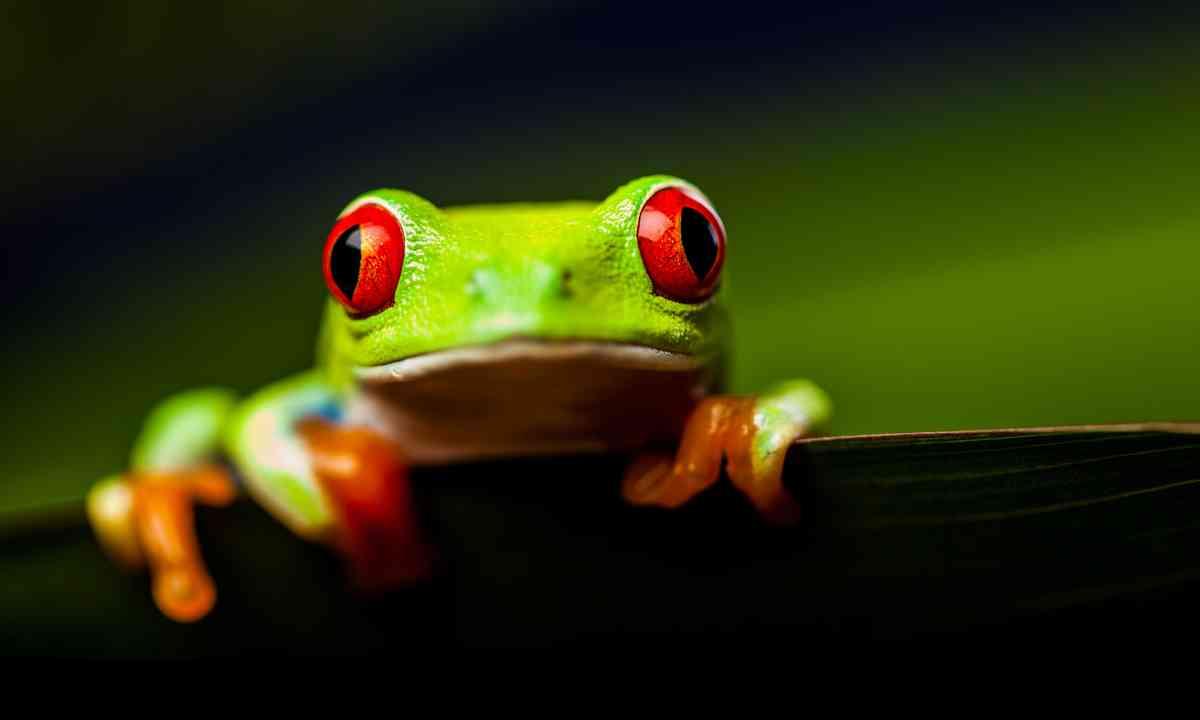Frog on a leaf (www.shutterstock.com)