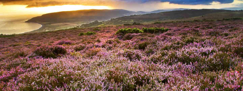 Views across Purlock Bay in Exmoor National Park (Dreamstime)