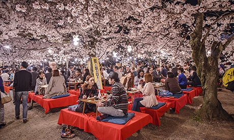 Cherry Blossom party (Shutterstock.com)