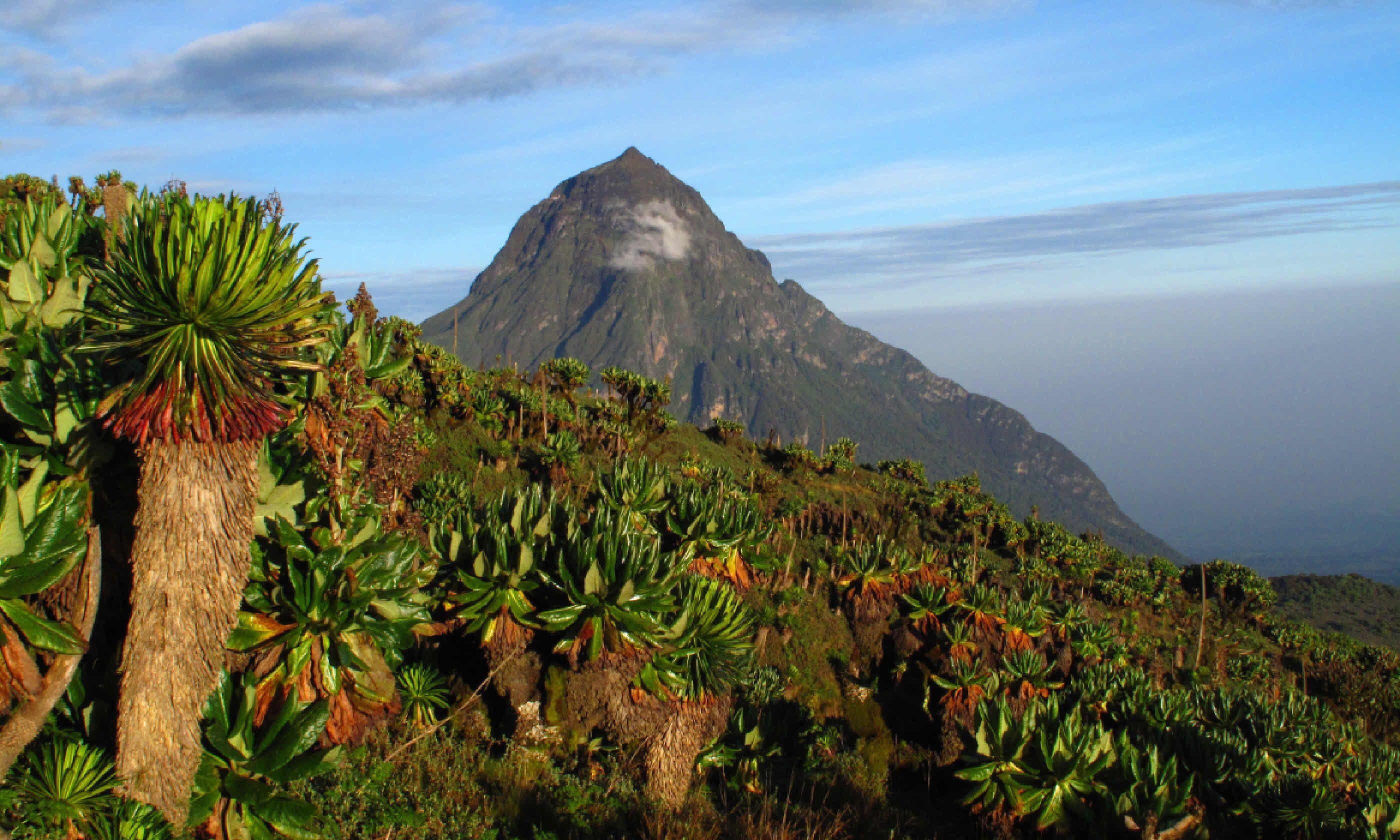 Mikeno volcano – DR Congo (Shutterstock)