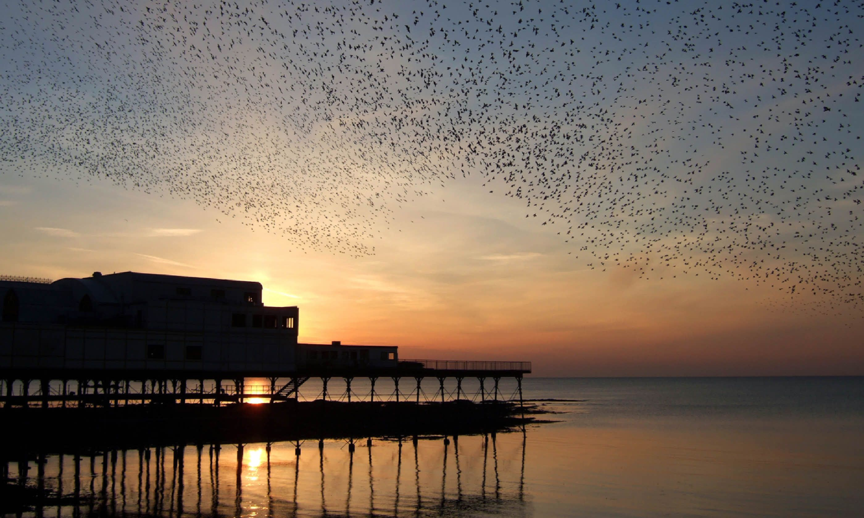 Huge flock of starlings over Aberystwyth Pier (Shutterstock)