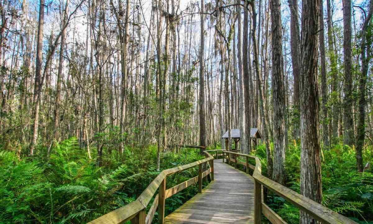 Everglades (Shutterstock)