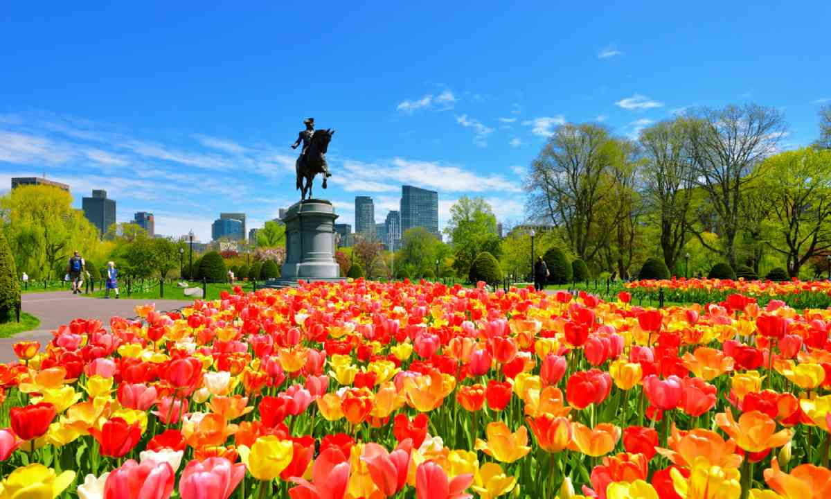 Boston Public Garden (Shutterstock)