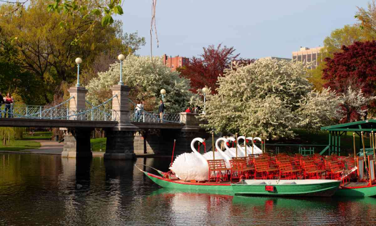 Swan Boats in Boston Common and Public Garden (Shutterstock)