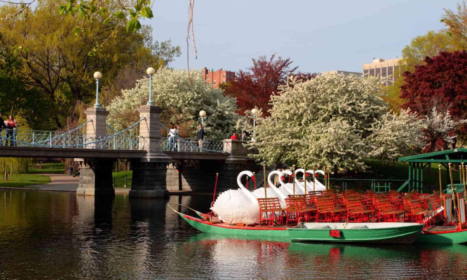 Swan Boats in Boston Common and Public Garden (Shutterstock)