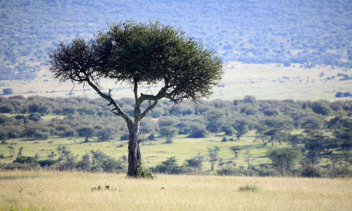 Great Rift Valley in Kenya (Shutterstock)