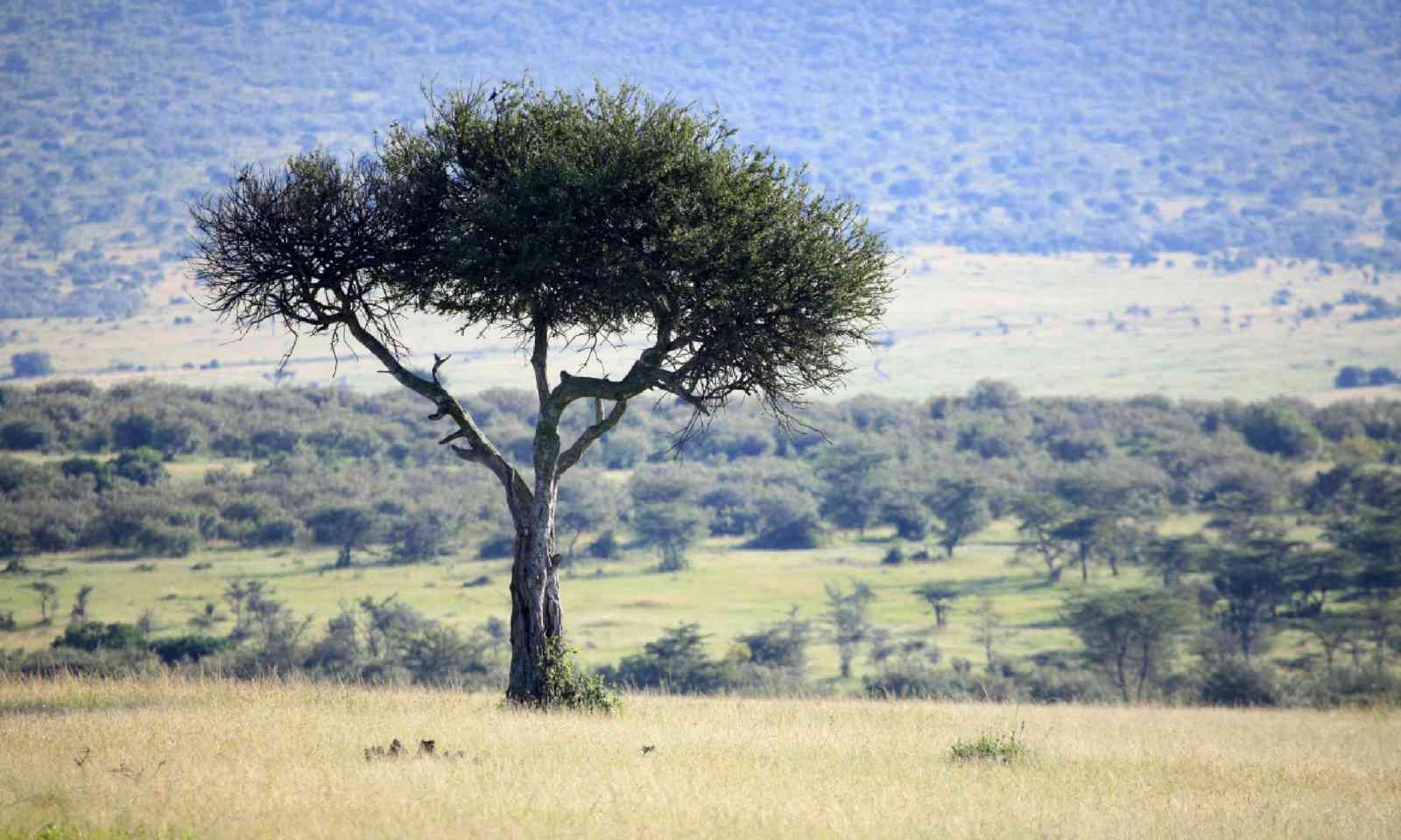 Great Rift Valley in Kenya (Shutterstock)