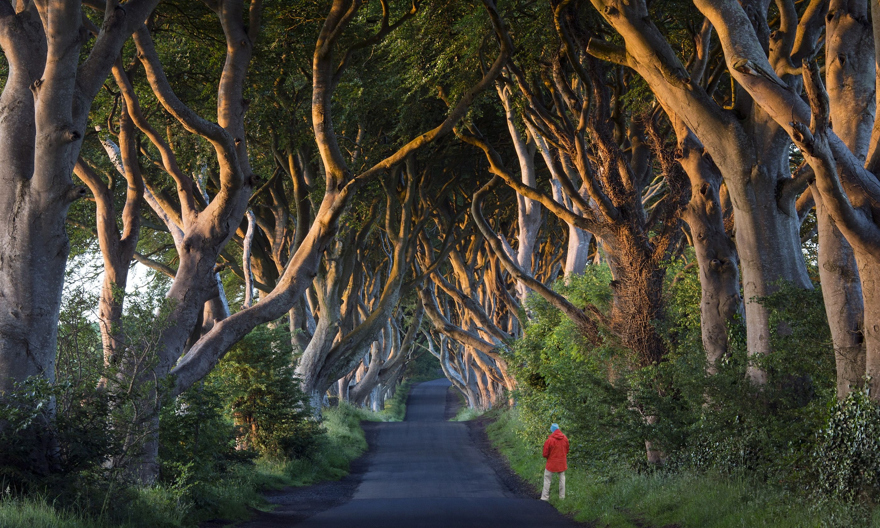 The Dark Hedges in County Antrim (Dreamstime)