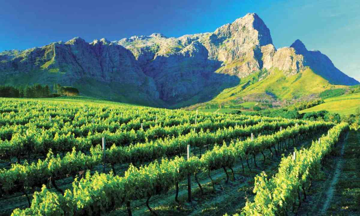 Vineyard in Franschoek (Grande Provence Estate)