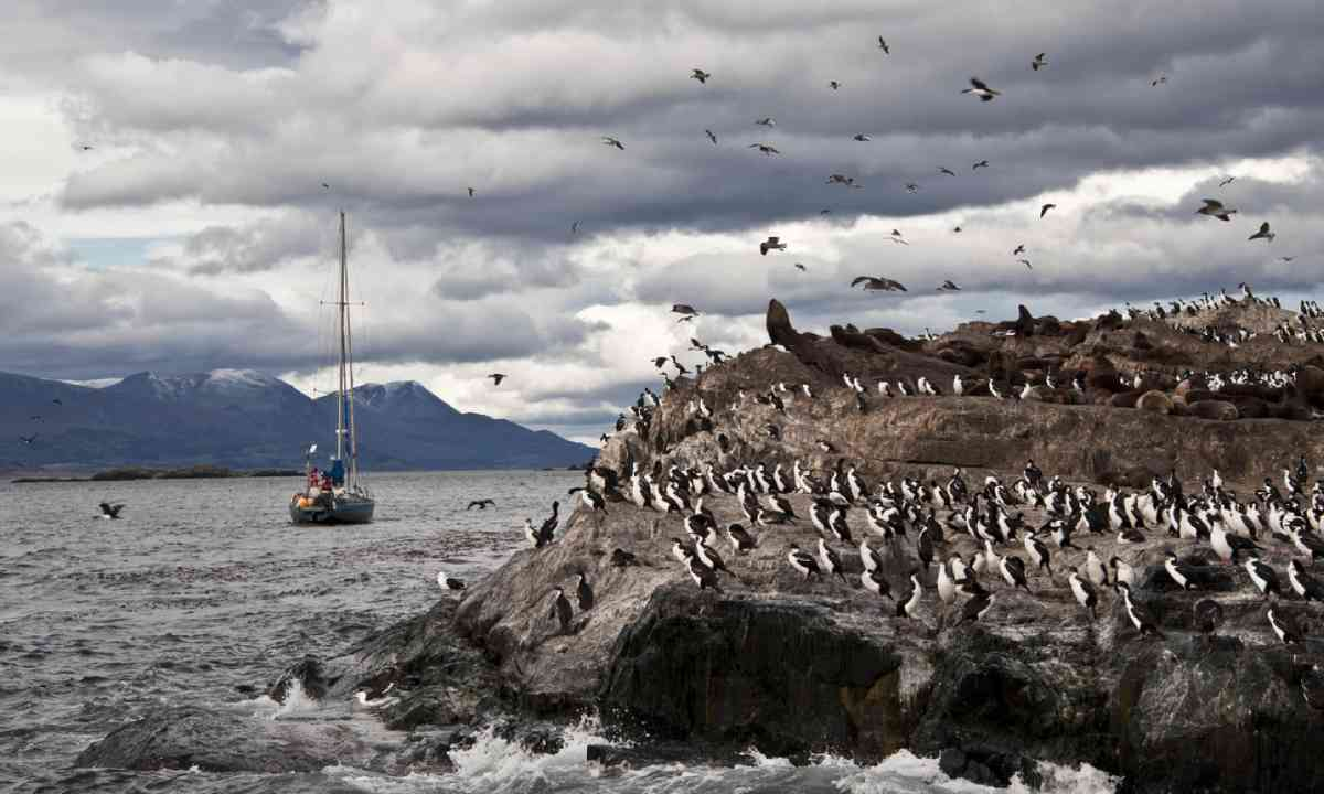King Cormorant colony on an Island in the Beagle Channel (Shutterstock)