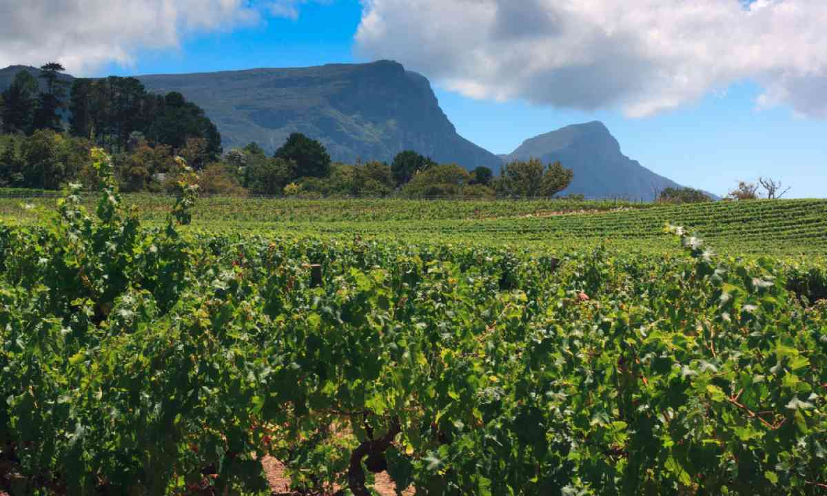 Vineyards of Groot Constantia (Shutterstock)