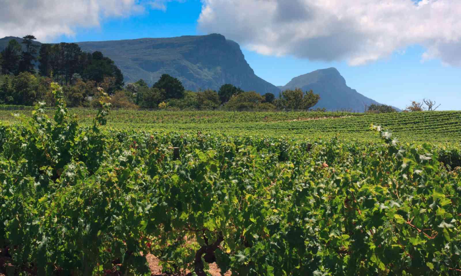 Vineyards of Groot Constantia (Shutterstock)