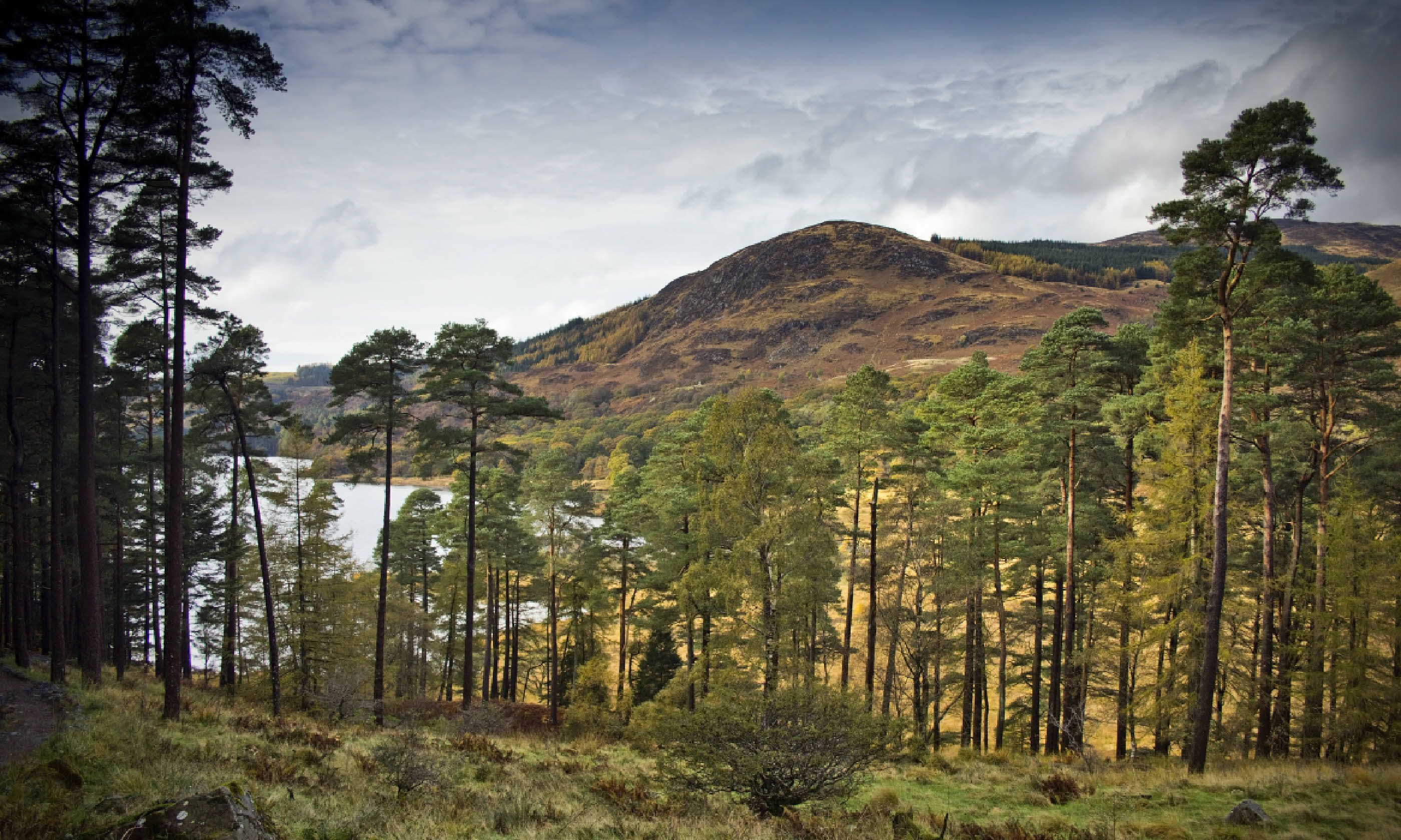 Scots Pines in Galloway Forest Park (Shutterstock)