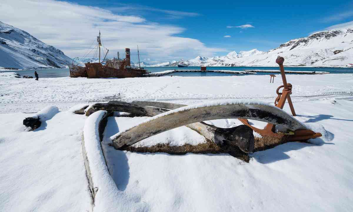 Frozen Grytviken