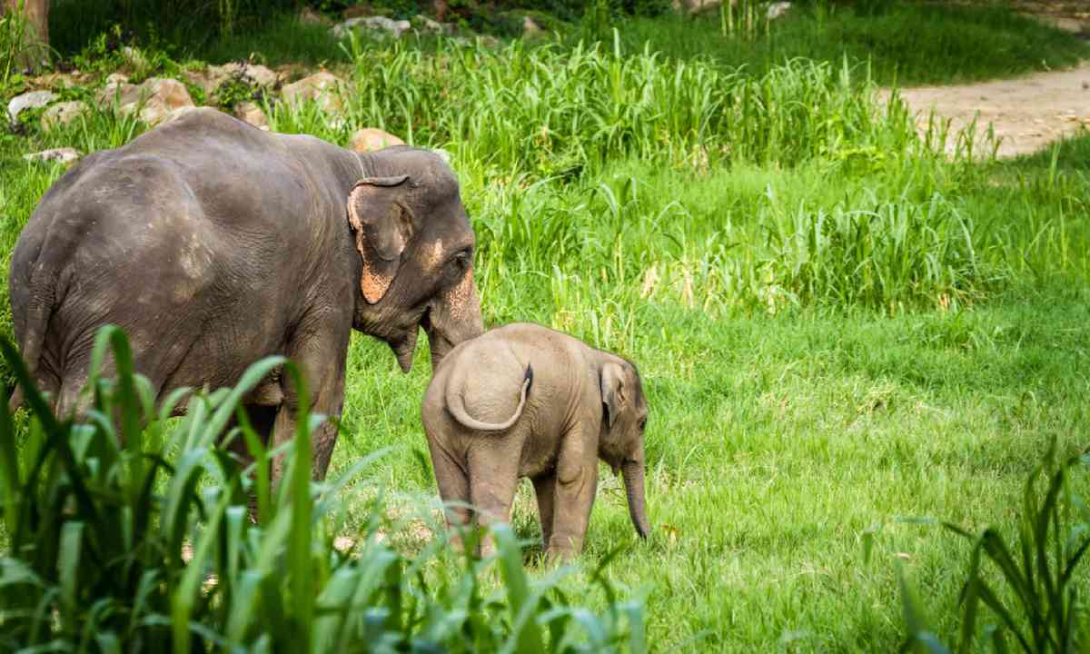 Mother and baby elephants, Thailand (Shutterstock)