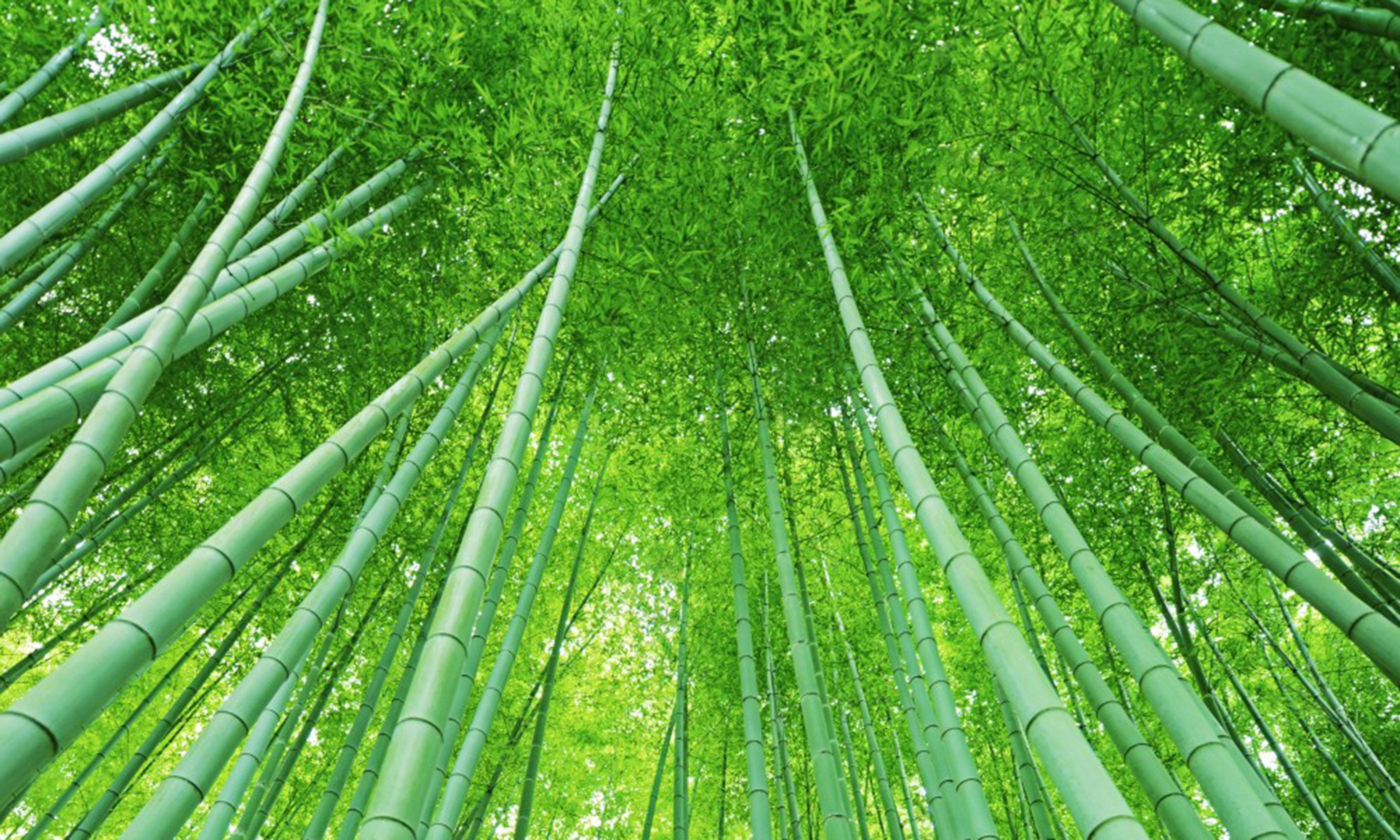 Arashiyama bamboo grove (Lisa Michele Burns)