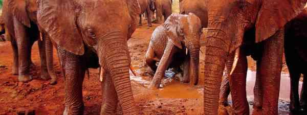 Tsavo elephants (Photo: Tsavo Trust)