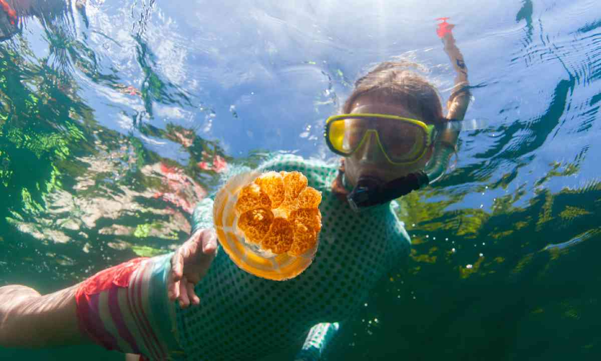 Snorkelling in Jellyfish Lake (Shutterstock)
