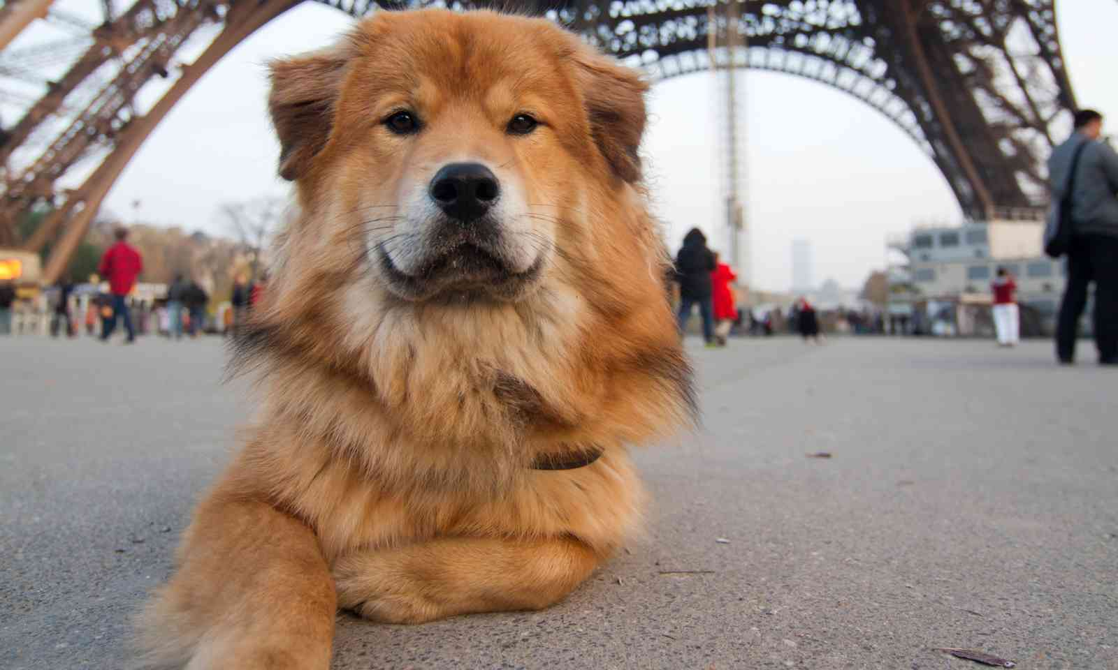 Dog in front of the Eiffel Tower (Dreamstime)