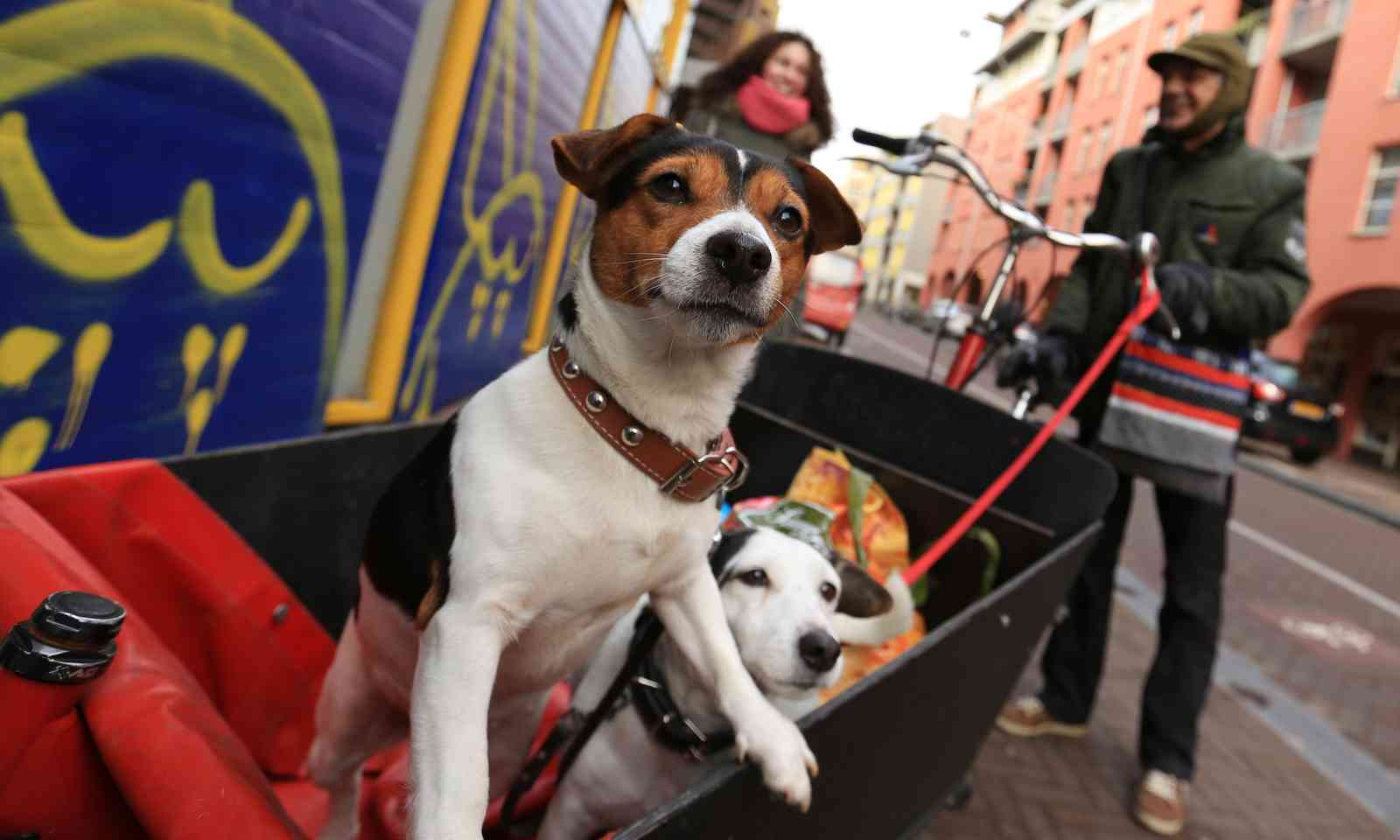 Cycle dogs in Amsterdam (Dreamstime)