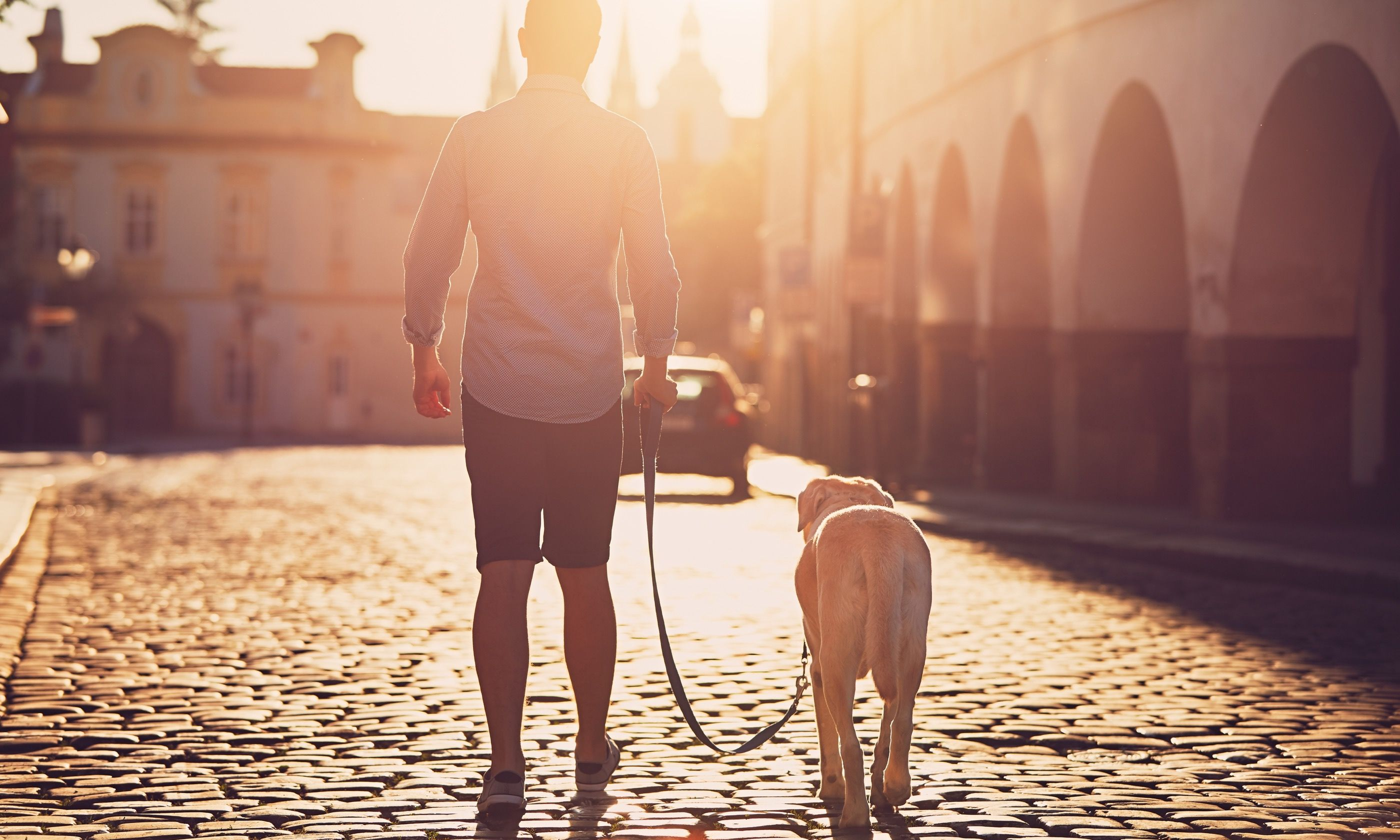 Walking a dog at sunrise in Prague (Dreamstime)