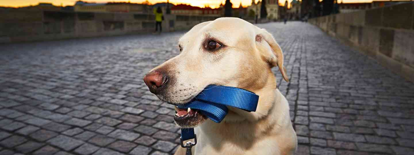Dog on Charles Bridge in Prague (Dreamstime)
