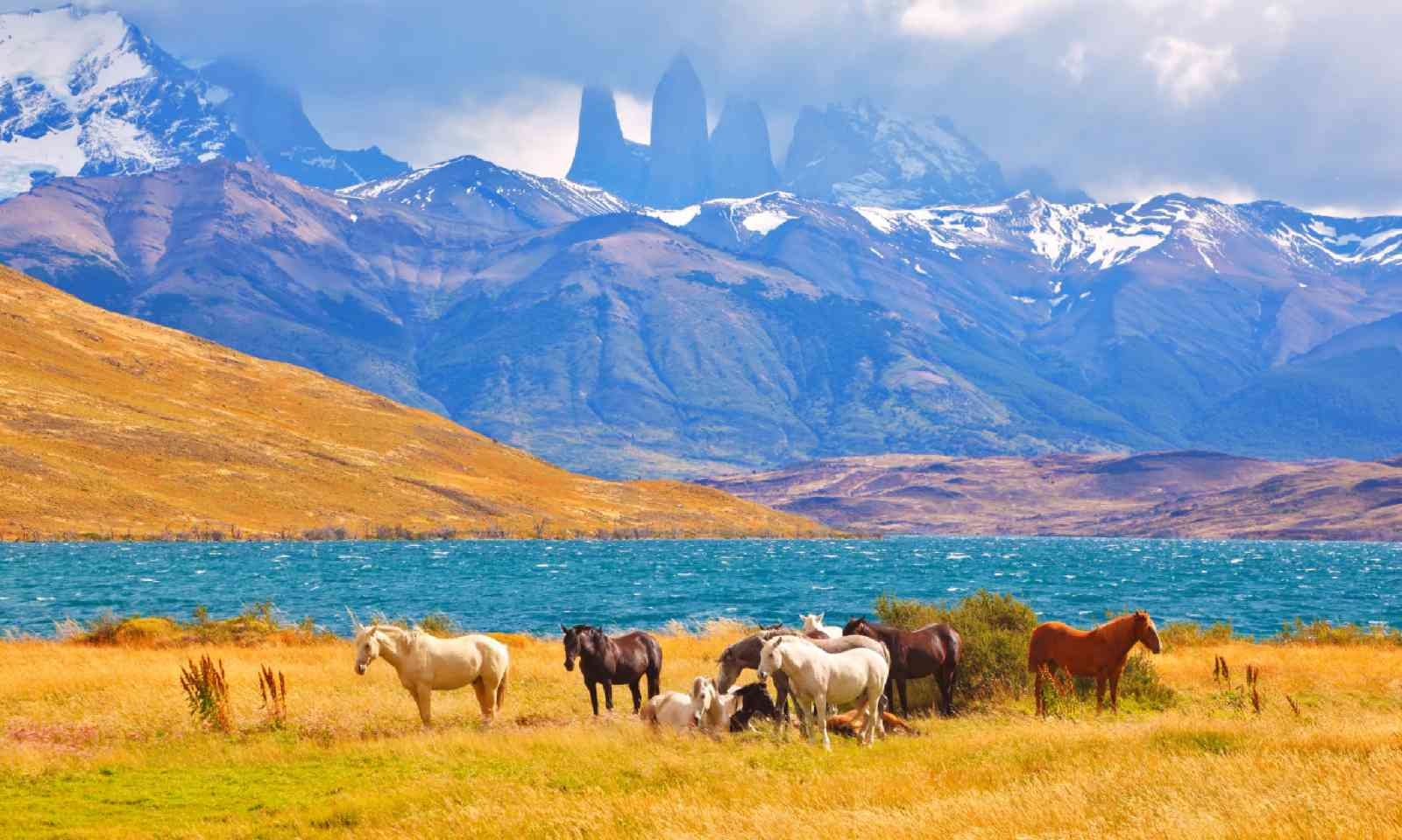 Horses and Torres del Paine (Shutterstock)