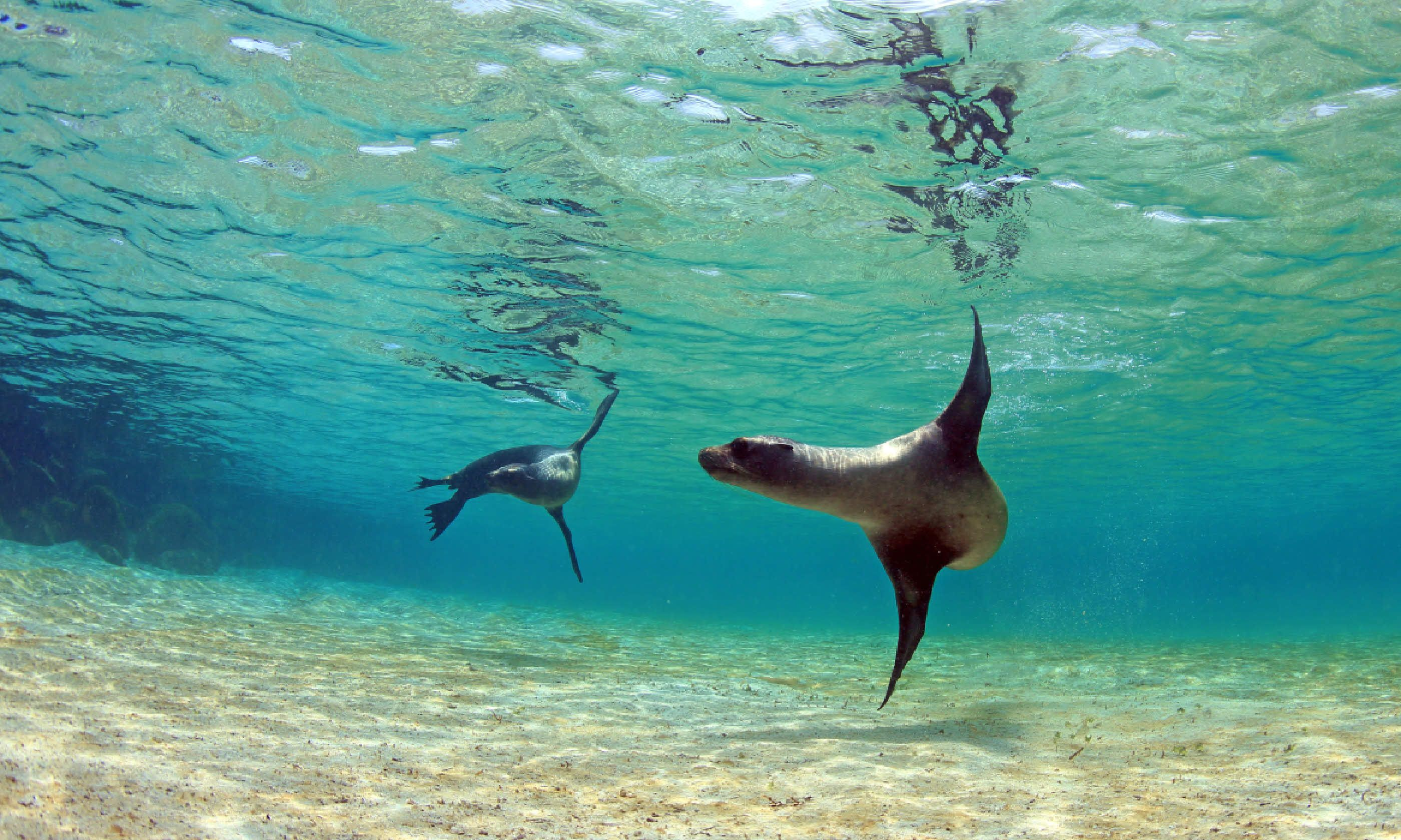 Sea lions in the Galapagos Islands (Shutterstock)