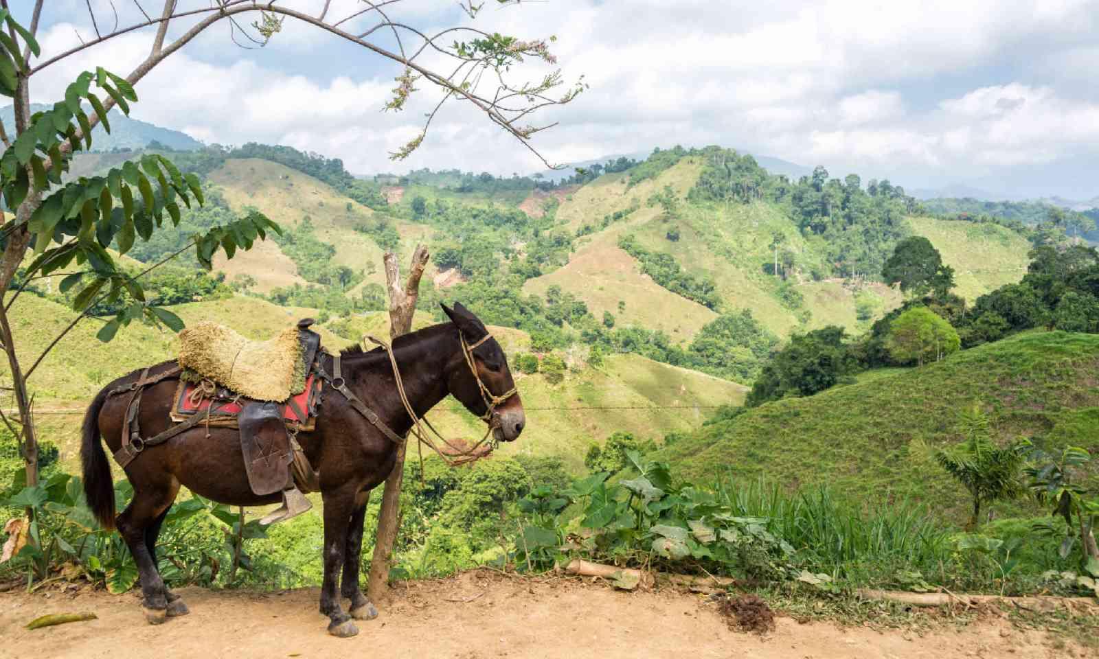 Donkey in Santa Marta (Shutterstock)
