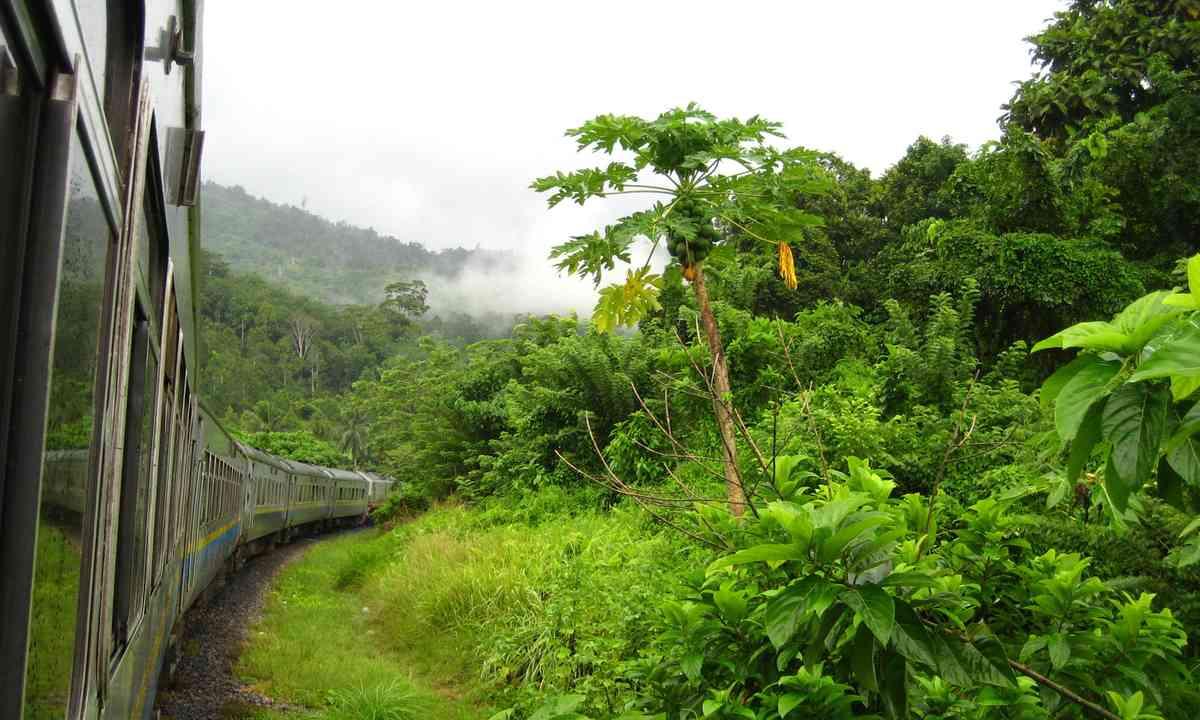 Malaysian jungle train (Shutterstock.com)