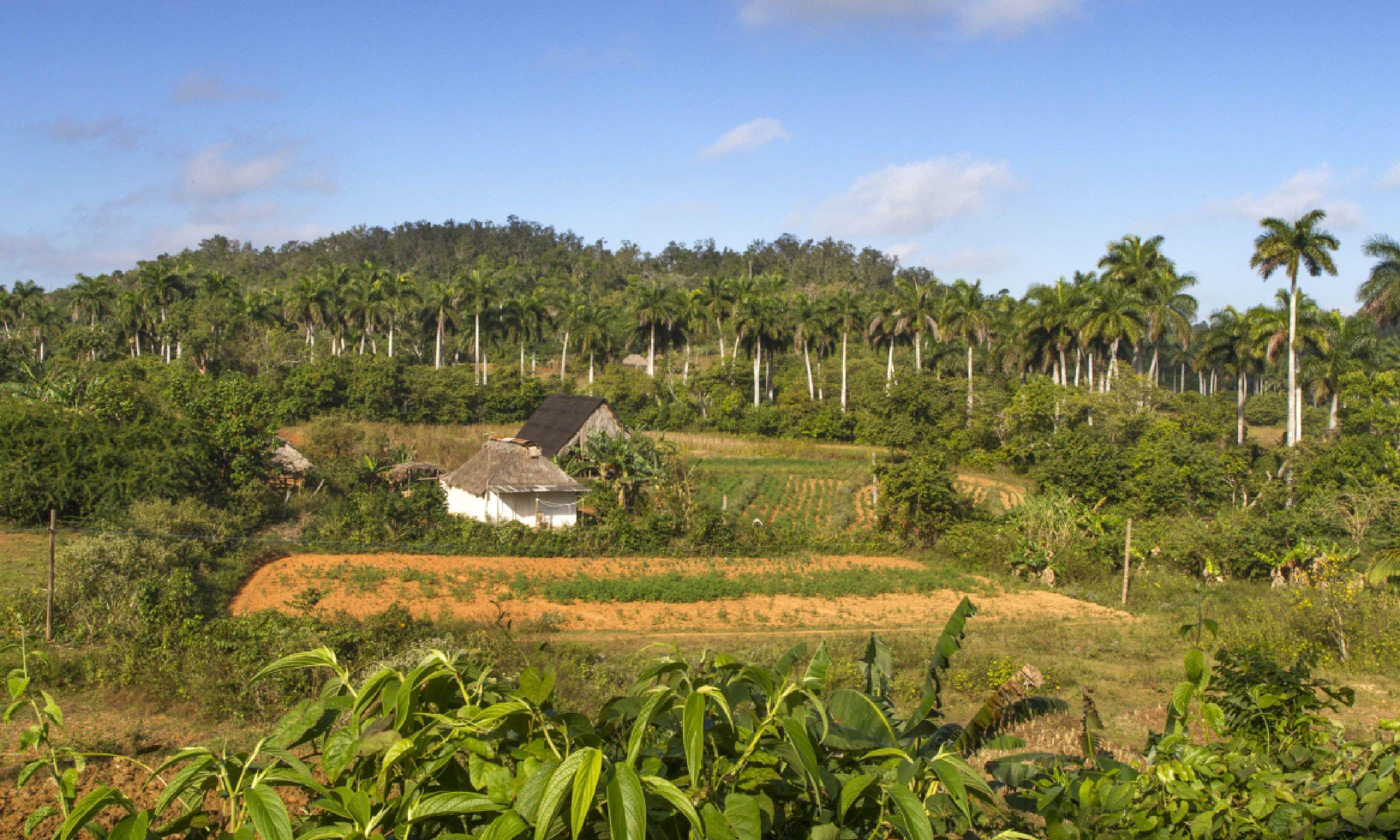 Cuban landscape (Shutterstock)