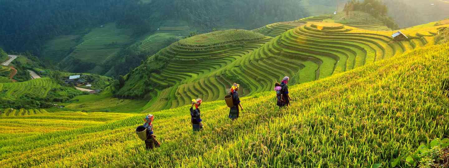 Women working in the rice paddies of northern Vietnam (Dreamstime)